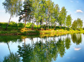 Reflection of trees in the river — Stock Photo