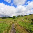 English pastures in Yorkshire — Stock Photo #5102834
