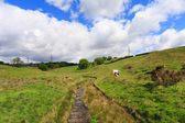 English pastures in Yorkshire — Stock Photo