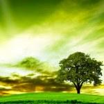 Oak tree in summer — Stock Photo