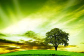 Oak tree in summer — Stock Photo