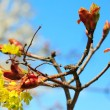 Blossoms twig on blue sky — Stock Photo