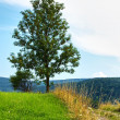 Tree on the hill - Stock Photo