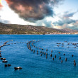 Mussel Cultivation in Croatia - Stock Photo