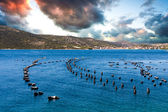 Mussel Cultivation in Croatia — Stock Photo