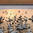 Stock Photo: Wildlife at sunset