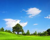 Green field, springtime — Stock Photo
