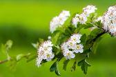 Green nature background — Stock Photo