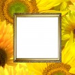 Gold frame on sunflower background — Stock Photo