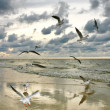 Flying seagulls, summer mosaic — Stock Photo #5322527