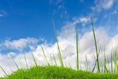 Green grass and cloudy sky — Foto de Stock