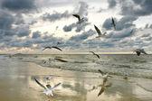 Flying seagulls, summer mosaic — Stock Photo