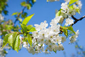 Spring flowers — 图库照片