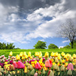 Springtime tulips and stormy sky - Stock Photo