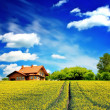 Sunny house and blue sky — Stock Photo