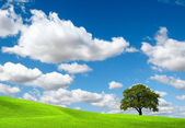 Green nature on cloudy sky — Stok fotoğraf