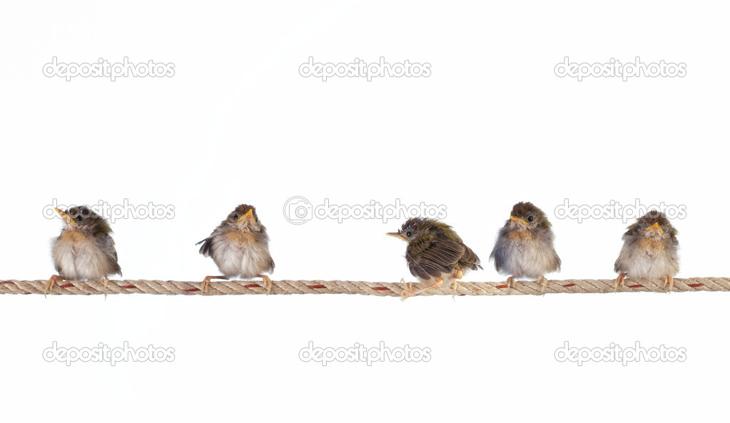 Close up view of nice little birds on white back — Stock Photo #5146528