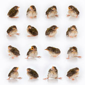 Birdy mix — Stock Photo