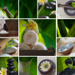 Close up view of spa theme objects on natural background — Stock Photo