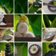 Close up view of spa theme objects on natural background — Stok fotoğraf