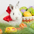 White rabbit with red bow surrounded by Easter eggs — Stock Photo