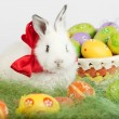 Stock Photo: White rabbit with red bow surrounded by Easter eggs