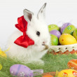 White Easter bunny with red bow on neck, next to a basket full o — Stock Photo