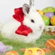 Cute bunny with a red bow on his neck sitting on grass surrounde — Lizenzfreies Foto