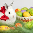 Easter bunny with red bow, sitting on grass, surrounded by color — Стоковая фотография