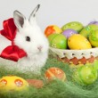 Easter bunny with red bow, sitting on grass, surrounded by color — Stock Photo
