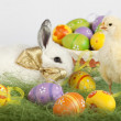 Baby chicken standing tall and white bunny surrounded by Easter — Stock Photo