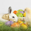 Cute baby chichen looking at Easter bunny and a basket full of p — Stock Photo