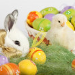 Cute bunny and baby chicken sitting on grass with Easter eggs in — Stock Photo #5351364