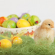 One cute yellow baby chicken — Stockfoto