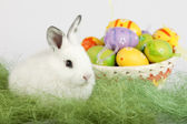 Cute bunny with Easter eggs, sitting on grass — Stock Photo