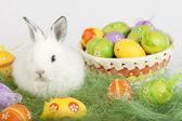 Coelho bonito rodeado por ovos de Páscoa — Fotografia Stock