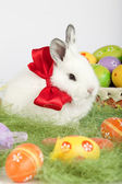 Cute bunny with a red bow on his neck sitting on grass surrounde — Stock Photo