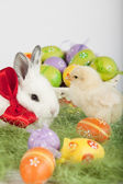 Cute bunny and small baby chicken, surrounded by Easter eggs — Stock Photo