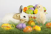 Baby chicken standing tall and white bunny surrounded by Easter — Stok fotoğraf