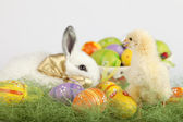 Cute baby chichen looking at Easter bunny and a basket full of p — Stok fotoğraf