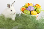 Easter eggs and a cute bunny on grass — Stock Photo
