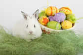 Cute Easter bunny near a basket full of painted eggs, looking at — Stock Photo