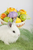 White cute bunny sitting on green grass, in front of a basket fu — Stock Photo