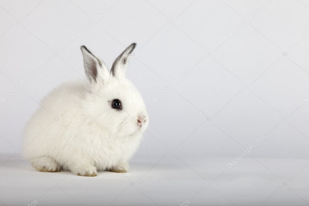 White baby rabbit — Stock Photo © IgooAna #5351379