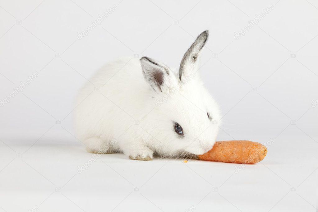 Уход за зайцем в домашних условиях
