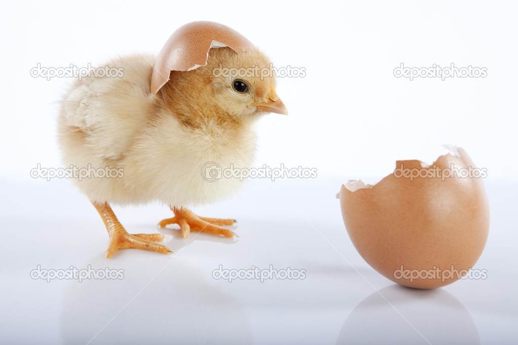 Easter concept image. One cute yellow baby chicken looking at an empty egg. High resolution image taken in studio, with reflection — Stock Photo #5351535