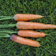 Carrot on the grass — Stock Photo
