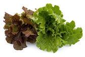 Two kinds of lettuce — Stock Photo