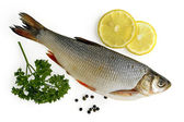 Fresh fish with lemon — Stockfoto