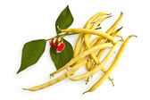 Fagioli gialli con un fiore — Foto Stock